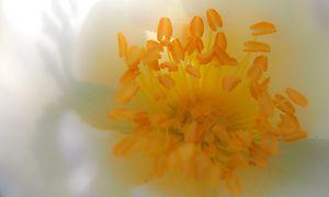 Gelber Blumenstempel